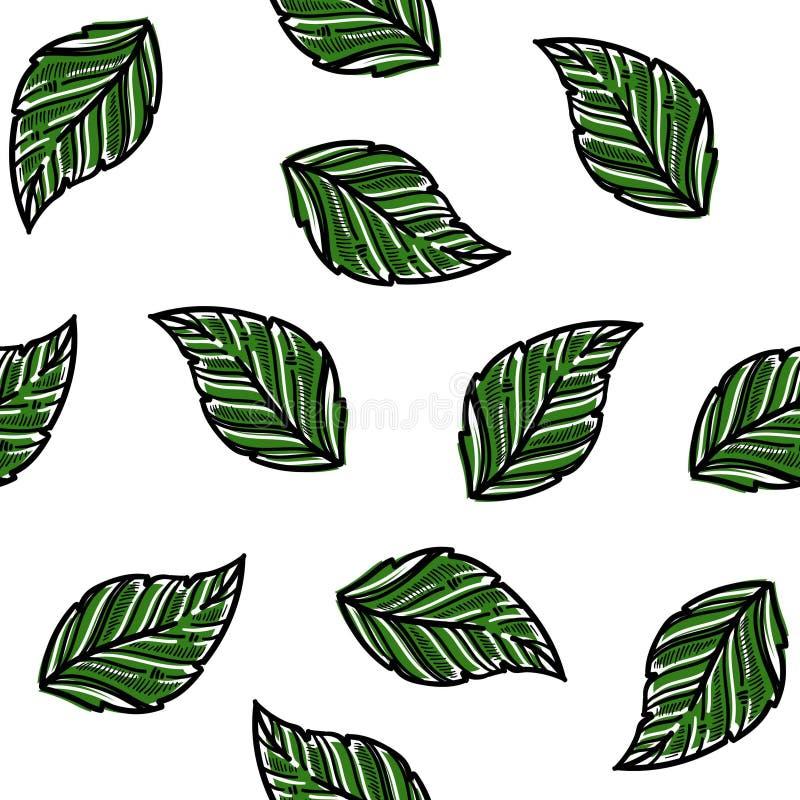 Nowy aromatyczny ziele opuszcza ulistnienia naturalnej rośliny bezszwowy wzór royalty ilustracja