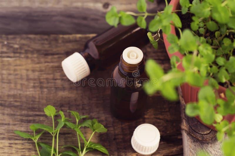 Nowy Istotny olej w Szklanej butelki i Świeżej mennicy sprigs, cyna obrazy stock