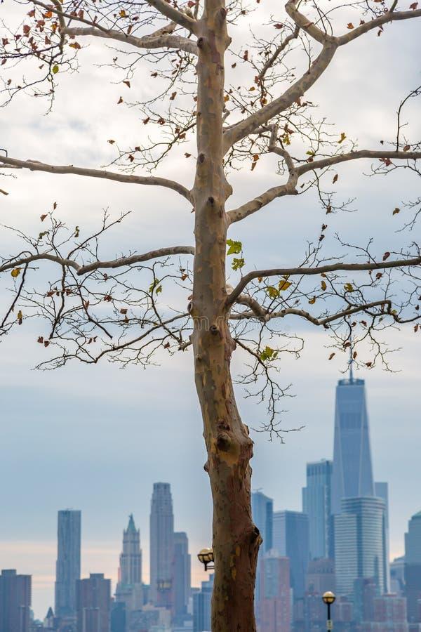 Nowy Jork linia horyzontu za Nagim drzewem fotografia royalty free
