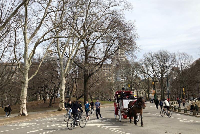 Nowy Jork, usa - Marzec 2019: Aktywność ludzie w central park w NYC obraz royalty free