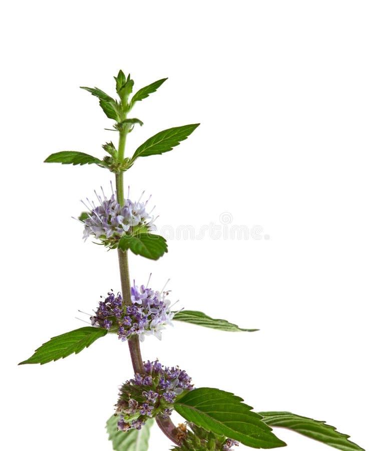 Nowy kwiat zdjęcie stock