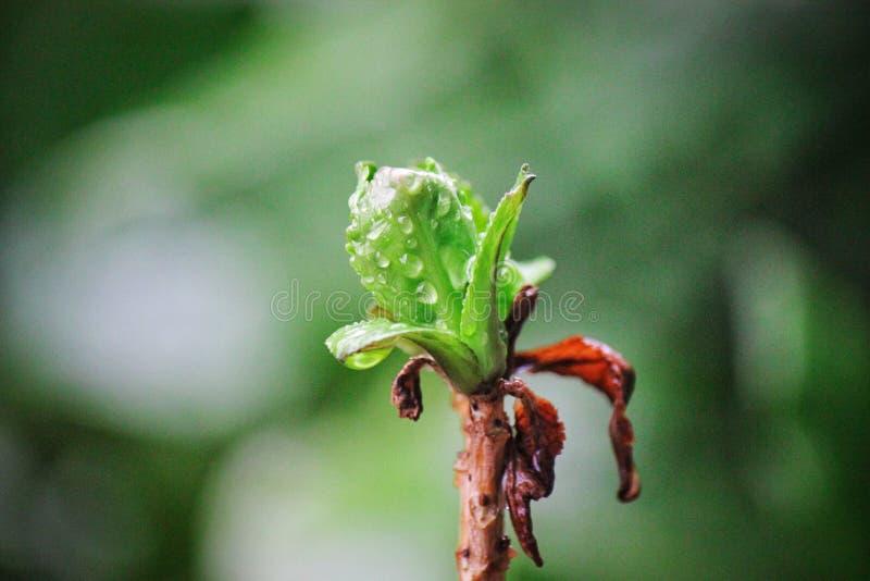 Nowy kwiatu pączek zdjęcia stock