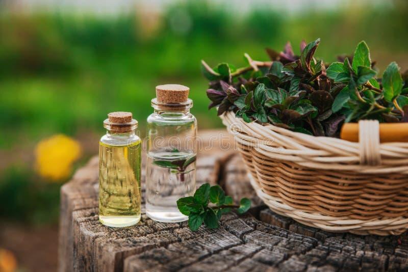 Nowy olej i fragrant esencja w małych butelkach z miętówką l zdjęcie royalty free