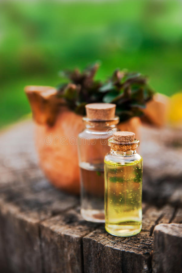 Nowy olej i fragrant esencja w małych butelkach z miętówką l fotografia royalty free