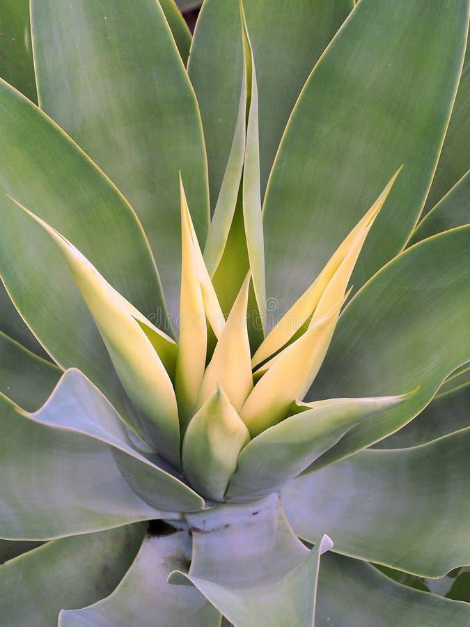 Nowy przyrost, Zielony krzak zdjęcie stock