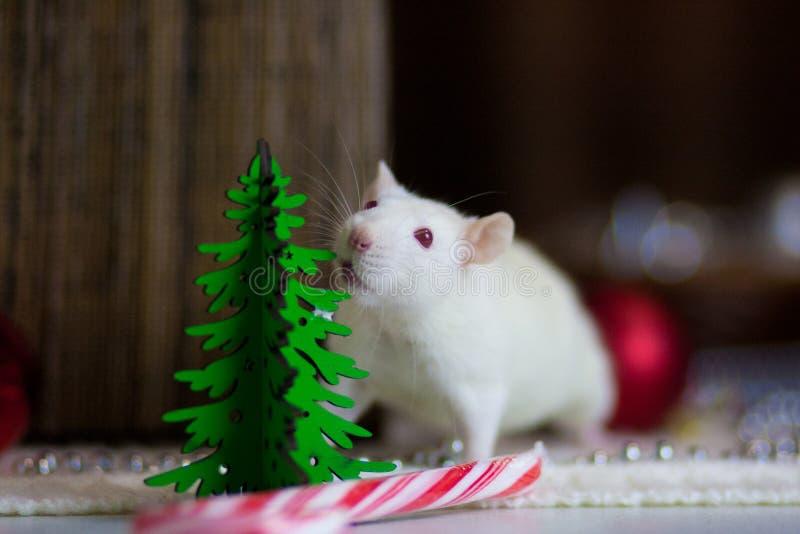 Nowy Rok mysz Bia?y mysz white szczura Mysz z choinką obraz stock
