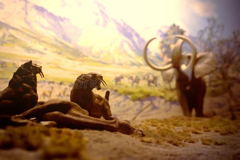 Nowy York, usa, Listopad 2018 - prehistoryczna łowiecka scena z mamutami i smilodons obrazy royalty free