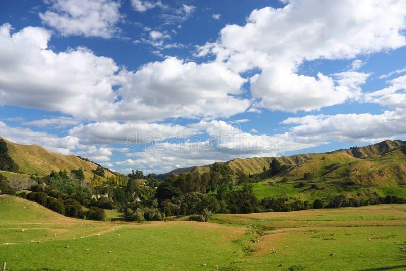 nowy Zealand zdjęcia royalty free