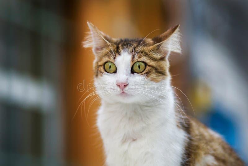 2018 nowych fotografii, śliczna przybłąkana kot głowa z zdziwioną twarzą zdjęcie royalty free