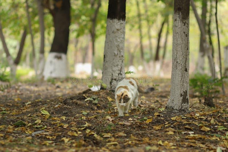 2018 nowych fotografii, śliczni brown biali długie włosy przybłąkani kotów spacery w lesie zdjęcie royalty free