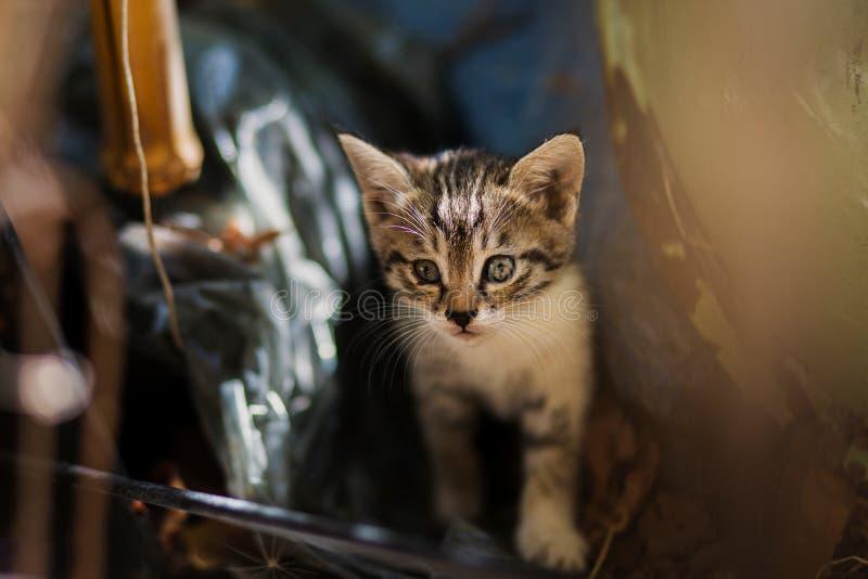 2018 nowych fotografii, uroczy przybłąkany dziecko kot zdjęcia royalty free
