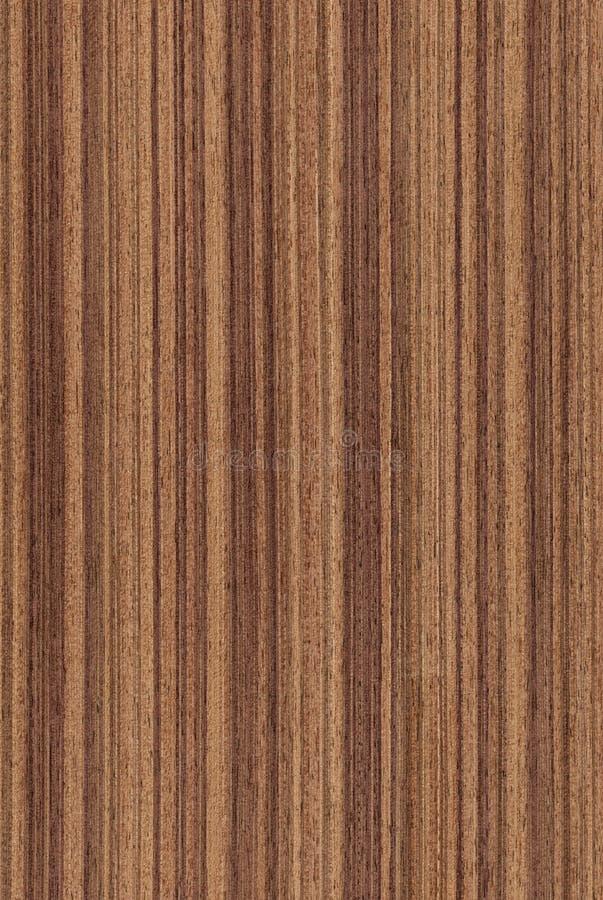 Noz (textura de madeira) fotos de stock