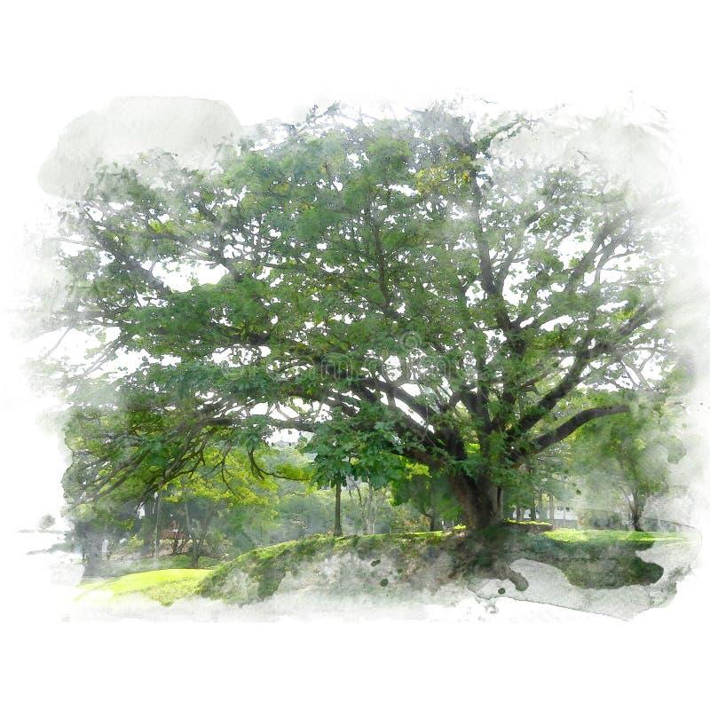 A noz verde gigante do indiano do leste de árvore de chuva ilustração stock