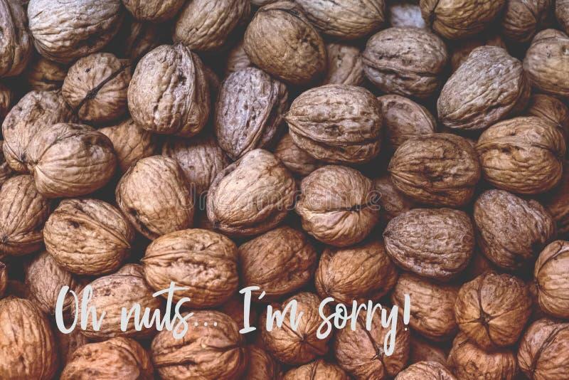 Nozes Desculpe! Uma fotografia de nozes com texto que lê 'oh nozes Sinto muito. foto de stock royalty free