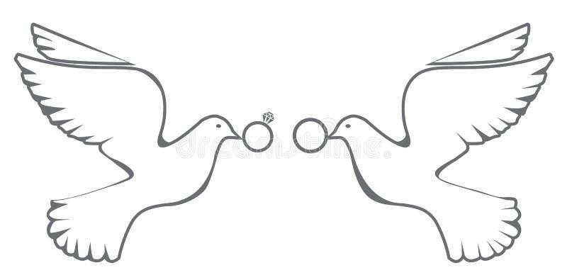 Nozze della colomba di vettore royalty illustrazione gratis