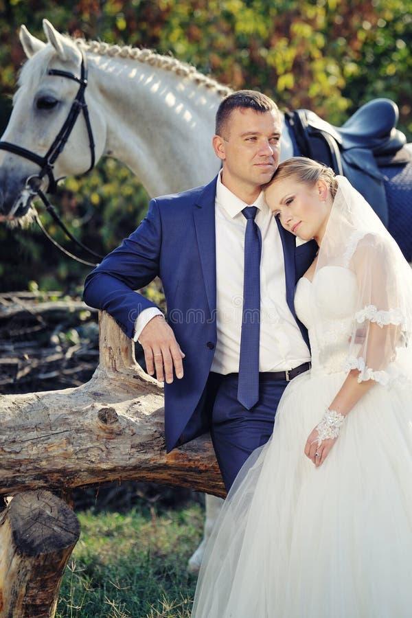 nozze Sposa e sposo con il cavallo bianco immagini stock libere da diritti