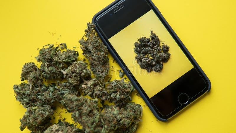 NPhone mit einer Fotografie des Marihuanas liegend auf einem gelben Hintergrund Sozialaktionen, zum des Legalisierungsmarihuanas  lizenzfreies stockfoto