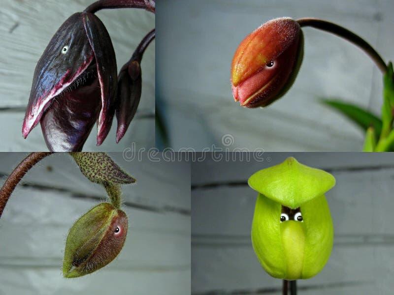 Nr 10 collage 'Orchideemensen ' stock fotografie