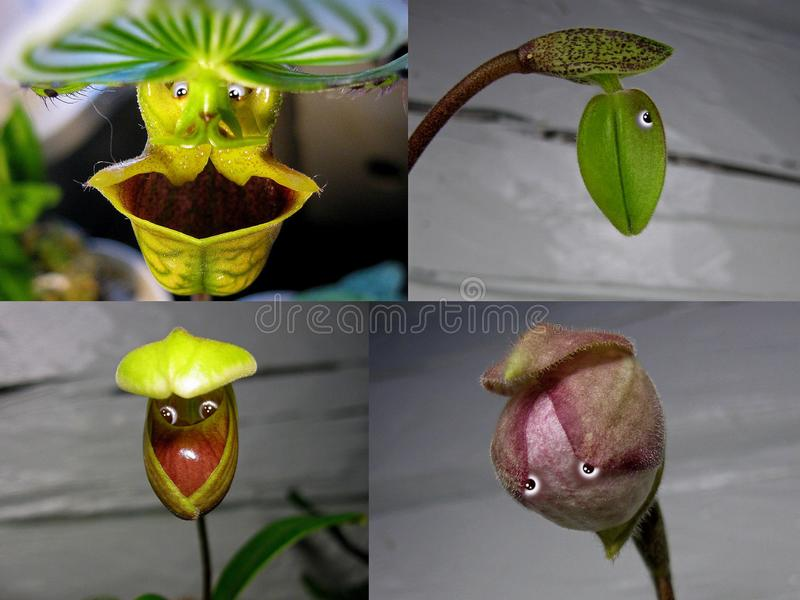 Nr 8 collage 'Orchideemensen ' royalty-vrije stock foto's