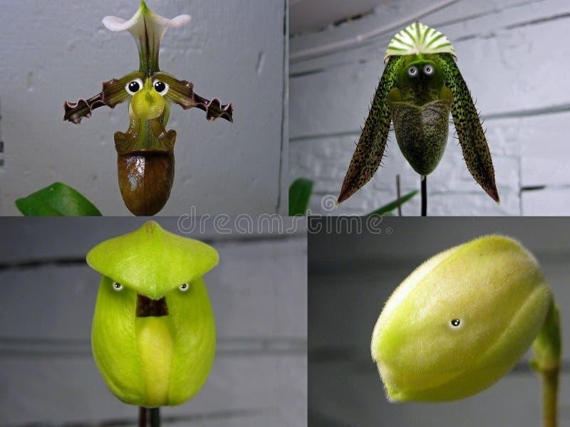 Nr 6 collage 'Orchideemensen ' royalty-vrije stock afbeelding