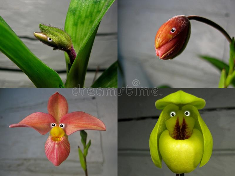 Nr 4 collage 'Orchideemensen ' stock afbeeldingen