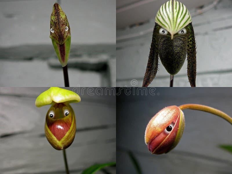 Nr 2 collage 'Orchideemensen ' royalty-vrije stock foto's