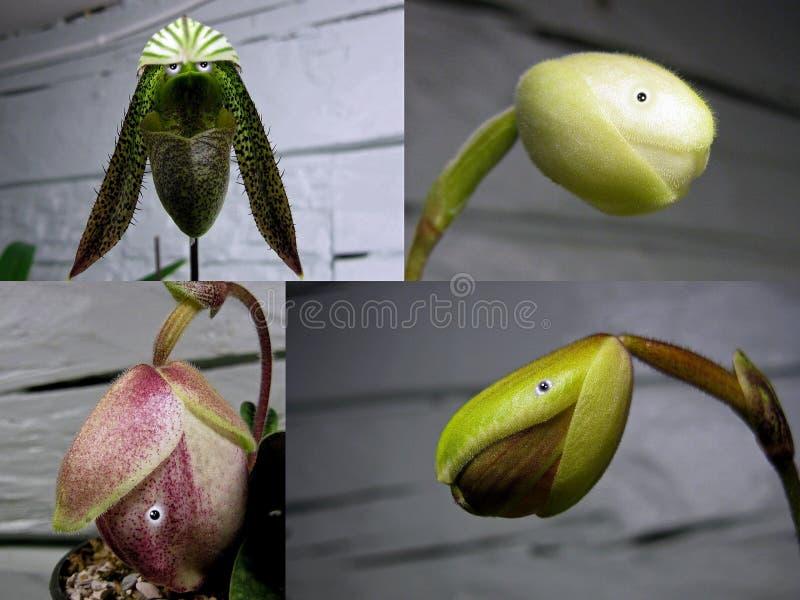 Nr 3 collage 'Orchideemensen ' stock foto