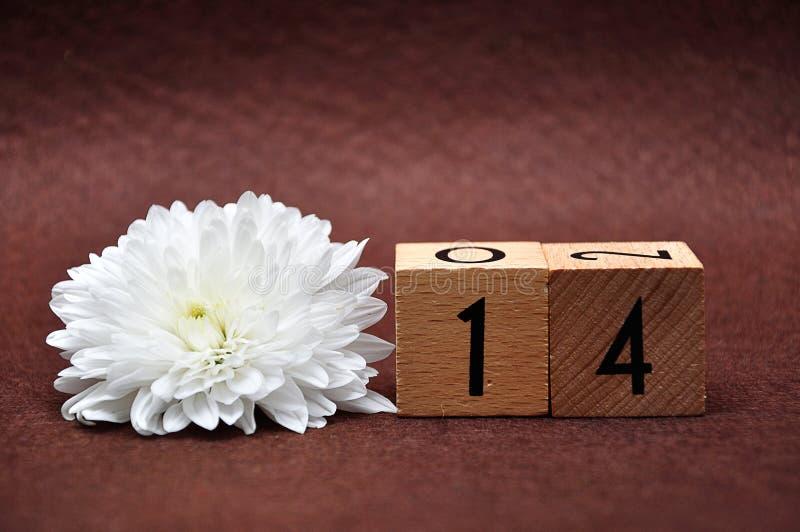 Nr. vierzehn mit einer weißen Aster lizenzfreies stockbild
