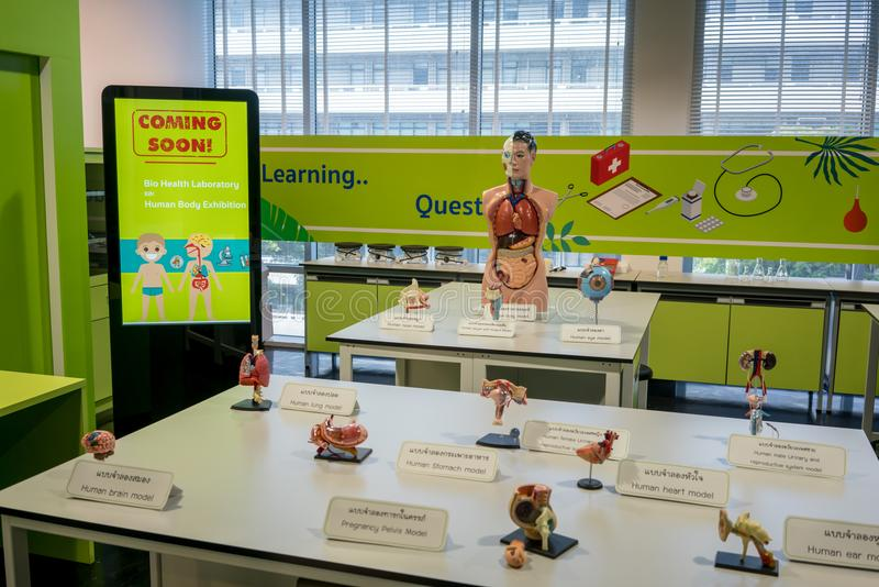 NSM Science Square, Bangkok, Thaialnd, Mar 2, 2018 : Human body. And organ model display in education room stock photos