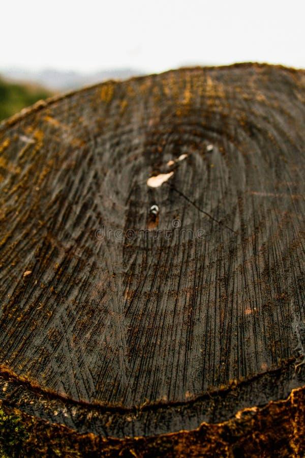 Nterior van een getande houten boomstam royalty-vrije stock afbeeldingen
