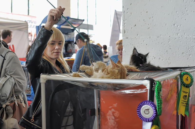 Nternational exhibition of cats. Specialized Exhibition of canine, feline clubs and animals. Competitions, exhibitions, competitions, special programs Zooshow stock photos