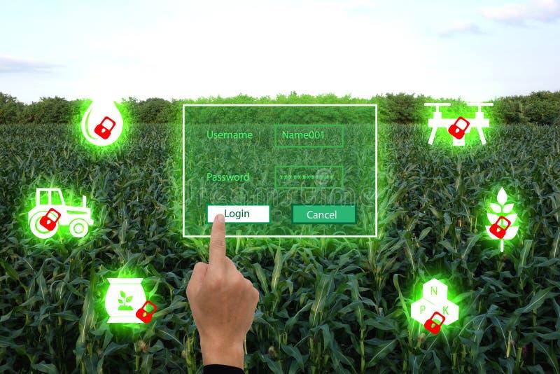 Nternet van thingsagricultureconcept, de slimme landbouw, industriële landbouw Het landbouwersgebruik de vinger opent de sleutel  stock fotografie