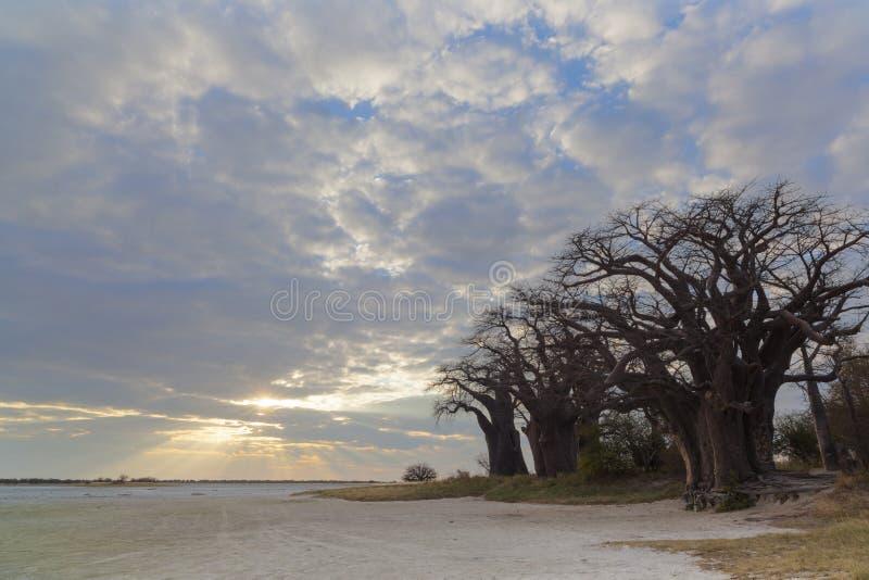 Nuages au coucher du soleil aux baobabs de Baines photos stock