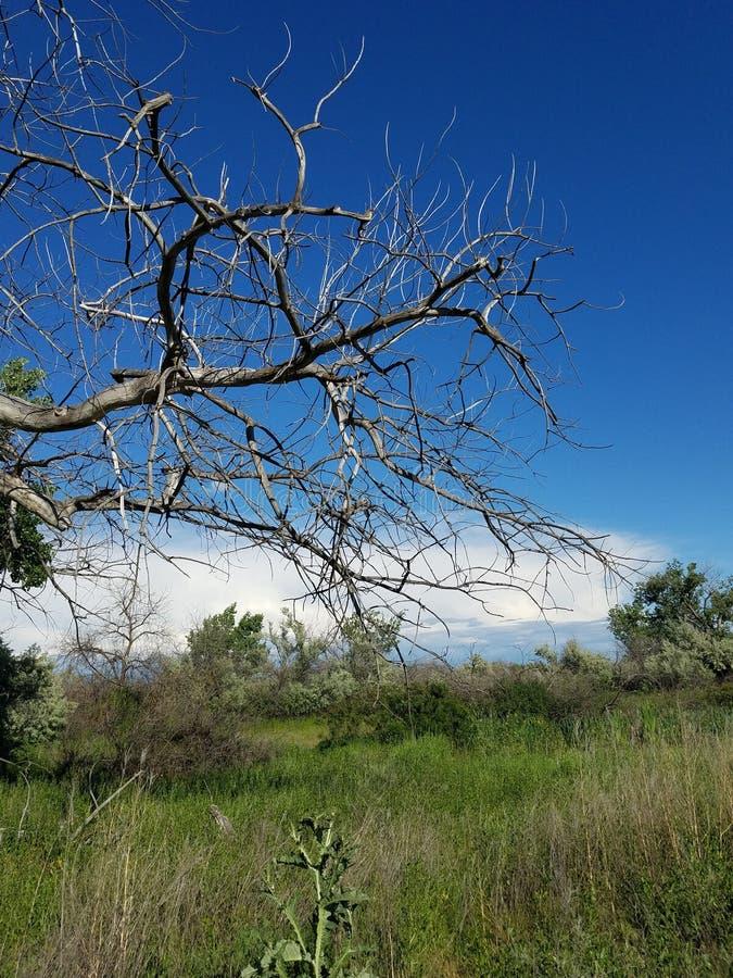 Nuages blancs morts de ciel bleu d'arbre images stock