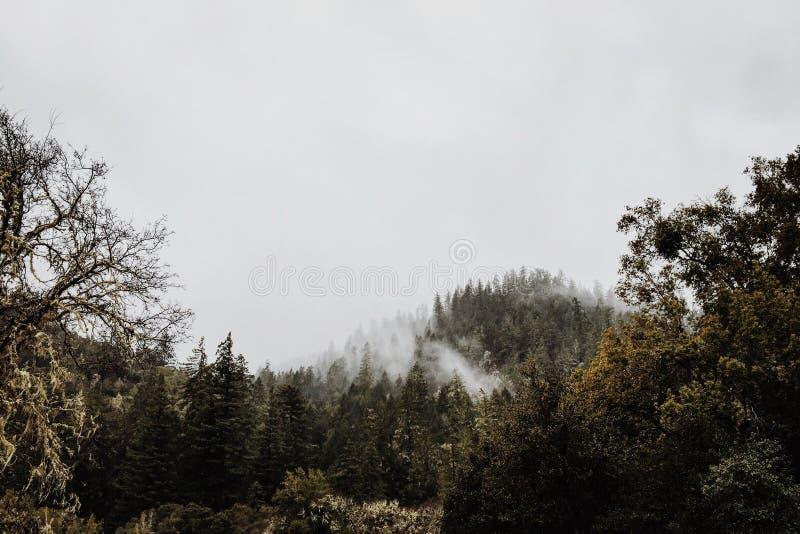 Nuages dans la forêt photographie stock