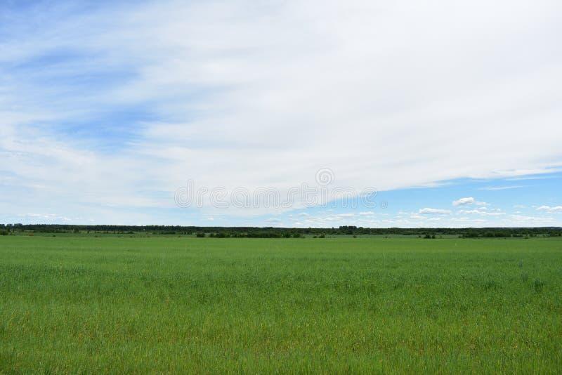 Nuages de ciel de cultures de plein champ de village rural photos stock