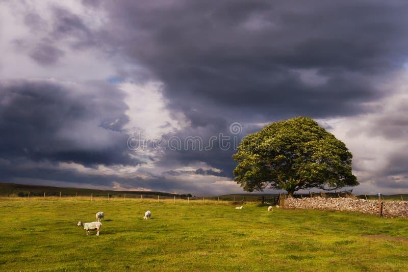 Nuages de tempête au-dessus d'un pâturage de Yorkshire près de Wharfedale image libre de droits