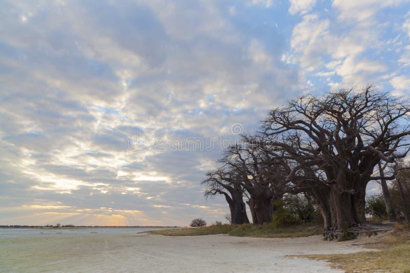 Nuages et coucher du soleil aux baobabs de Baines image stock