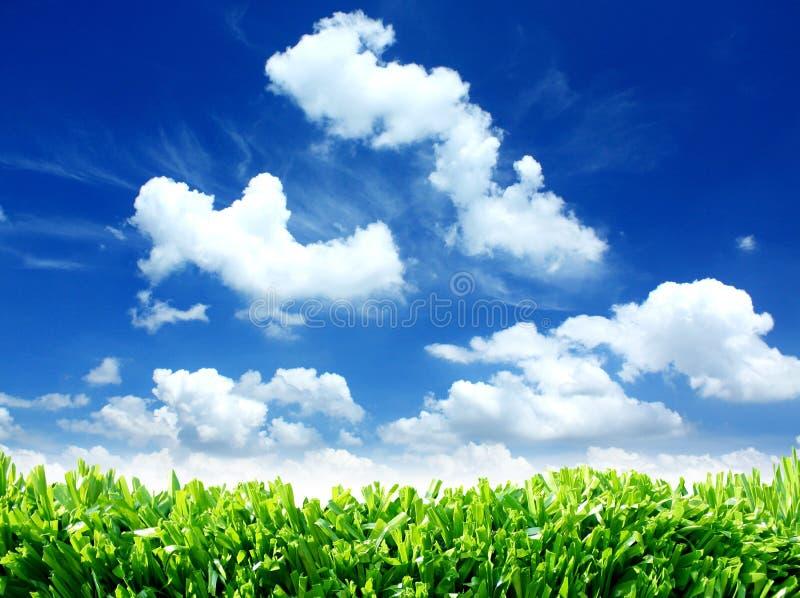 Nuages et herbe verts de ciel de nature d'Eco images libres de droits