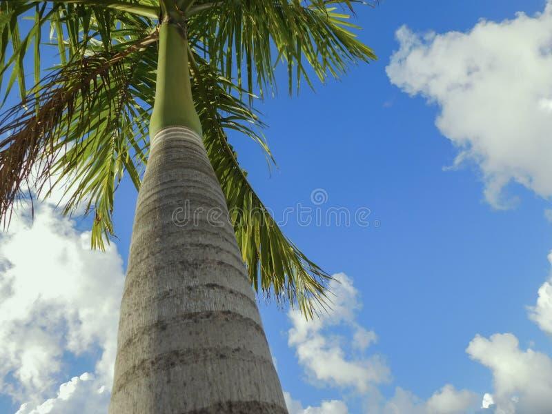Nuages et le palmier images stock