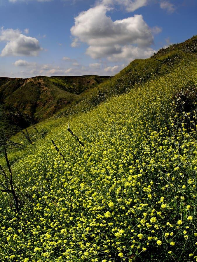 Nuages et vallée jaune photo stock