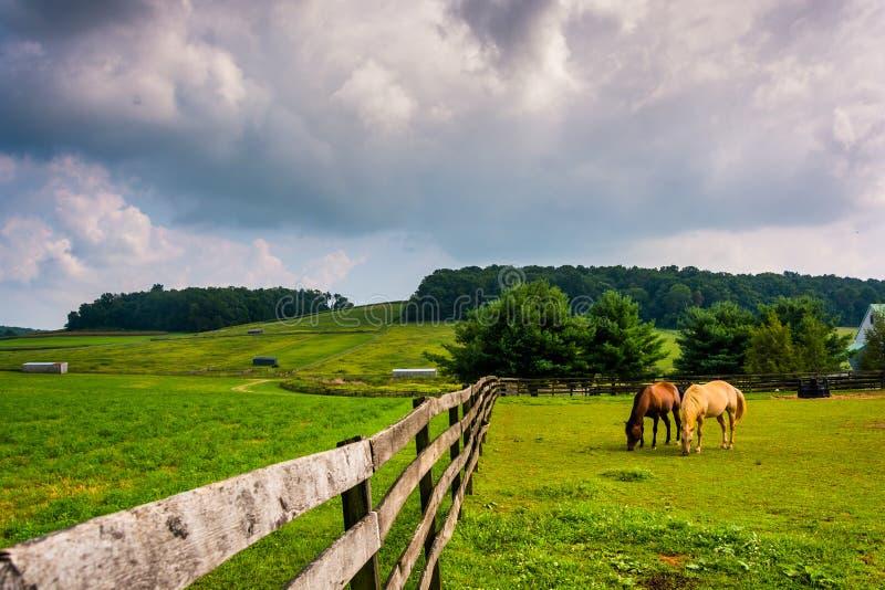 Nuages foncés au-dessus des chevaux et d'une barrière à une ferme à York rural Coun photographie stock