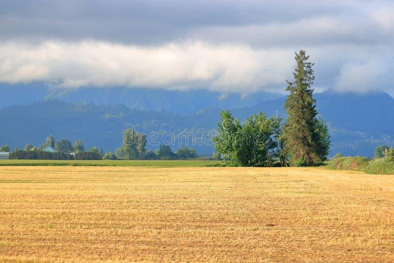 Nuages moissonnés de Hay Field et de pluie image stock