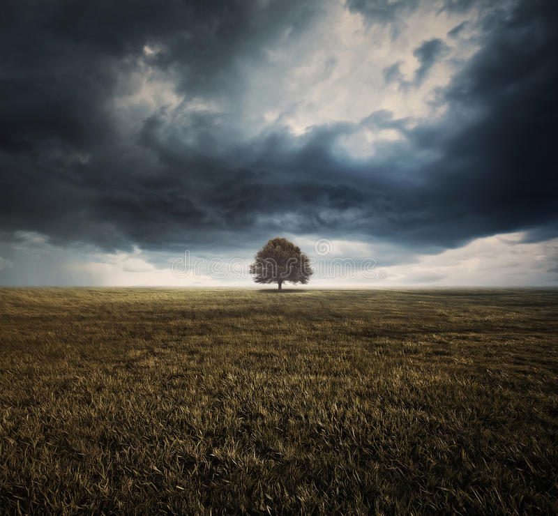 Nuages simples d'arbre et de tempête photos libres de droits