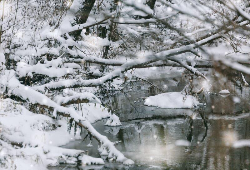Nuances de l'hiver, Forest Outdoors River Snowflakes image libre de droits