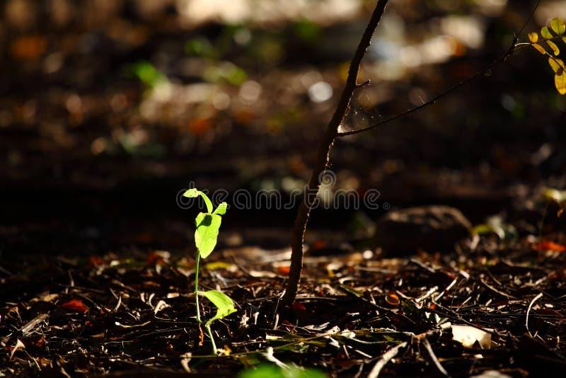 Nuances des feuilles images stock