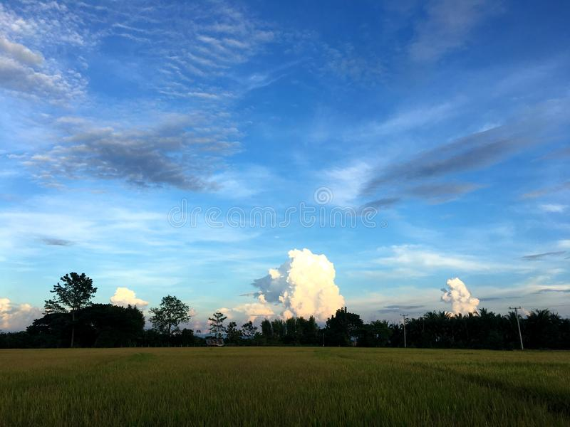 Nube blanca hermosa con el cielo azul detrás del campo del arroz por la tarde imagenes de archivo