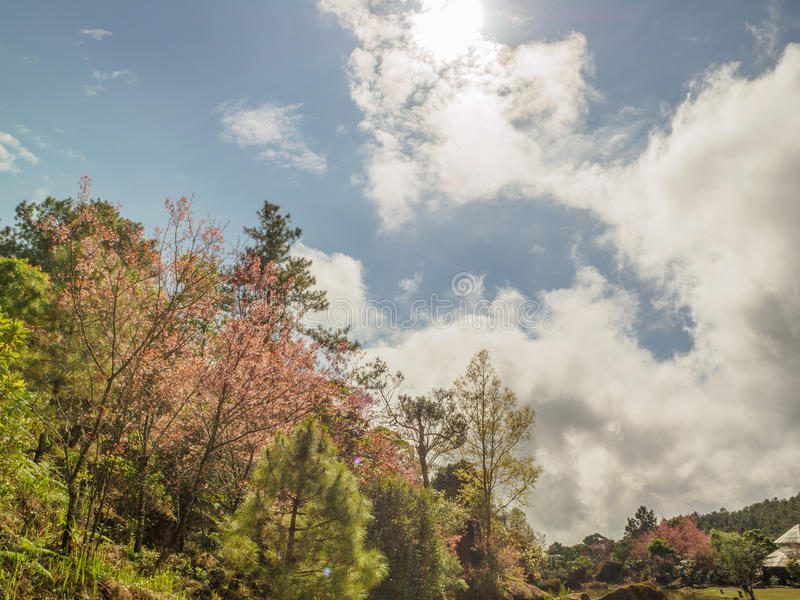 Nube de Sakura fotografía de archivo