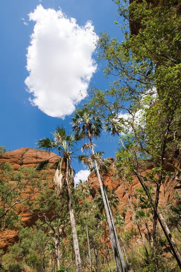 Nube sobre la garganta, Purnululu, Australia fotografía de archivo libre de regalías