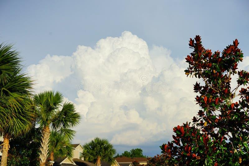 Nube y árbol de la Florida foto de archivo libre de regalías